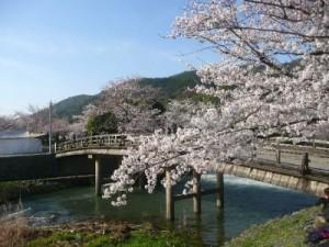 嵐山の桜5