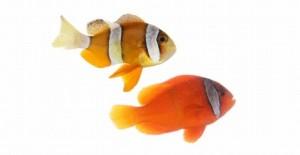 飼いたい-熱帯魚