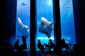 3美ら海水族館