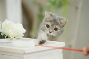 猫グッツ8選0