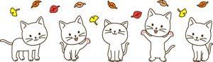 5匹の子猫2
