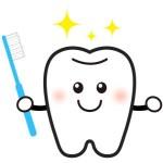 動物の天然毛の歯ブラシは歯茎にとても優しい