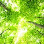 マイナスイオン発生 「森林浴のすすめ」と効果
