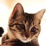 はじめて猫を飼ってみた するとこんなにも可愛いなんて
