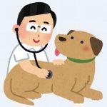 犬の主治医探しと健康