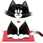 2代目猫ちゃんは靴下を履いた白黒猫