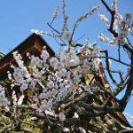 私の京都旅行のポイントは「定期観光バス」
