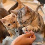 癒やしだけではない猫カフェ
