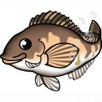 北海道の「ホッケ」ってこんな魚です